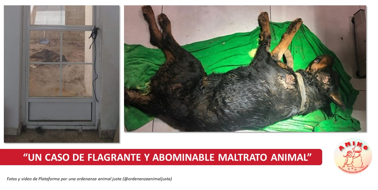 """UN CASO DE FLAGRANTE Y ABOMINABLE MALTRATO ANIMAL"""