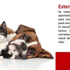 Por qué esterilizar a tus animales