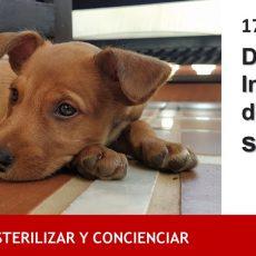 17 de Agosto / Día Internacional del Animal sin Hogar